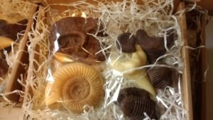 a set of fossils all made from chocolate wrapped in clear bags and sitting in shredded tissue paper