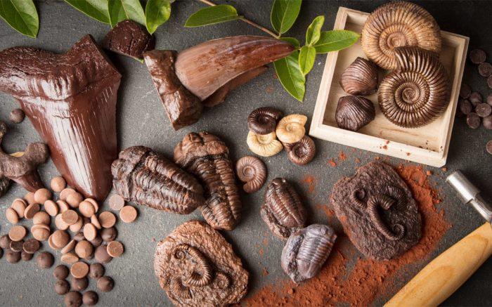 collection of fossils made out of chocolate on a slate background with cocoa powder and chocolate buttons with ammonites trilobites and megalodon sharks teeth an T.rex
