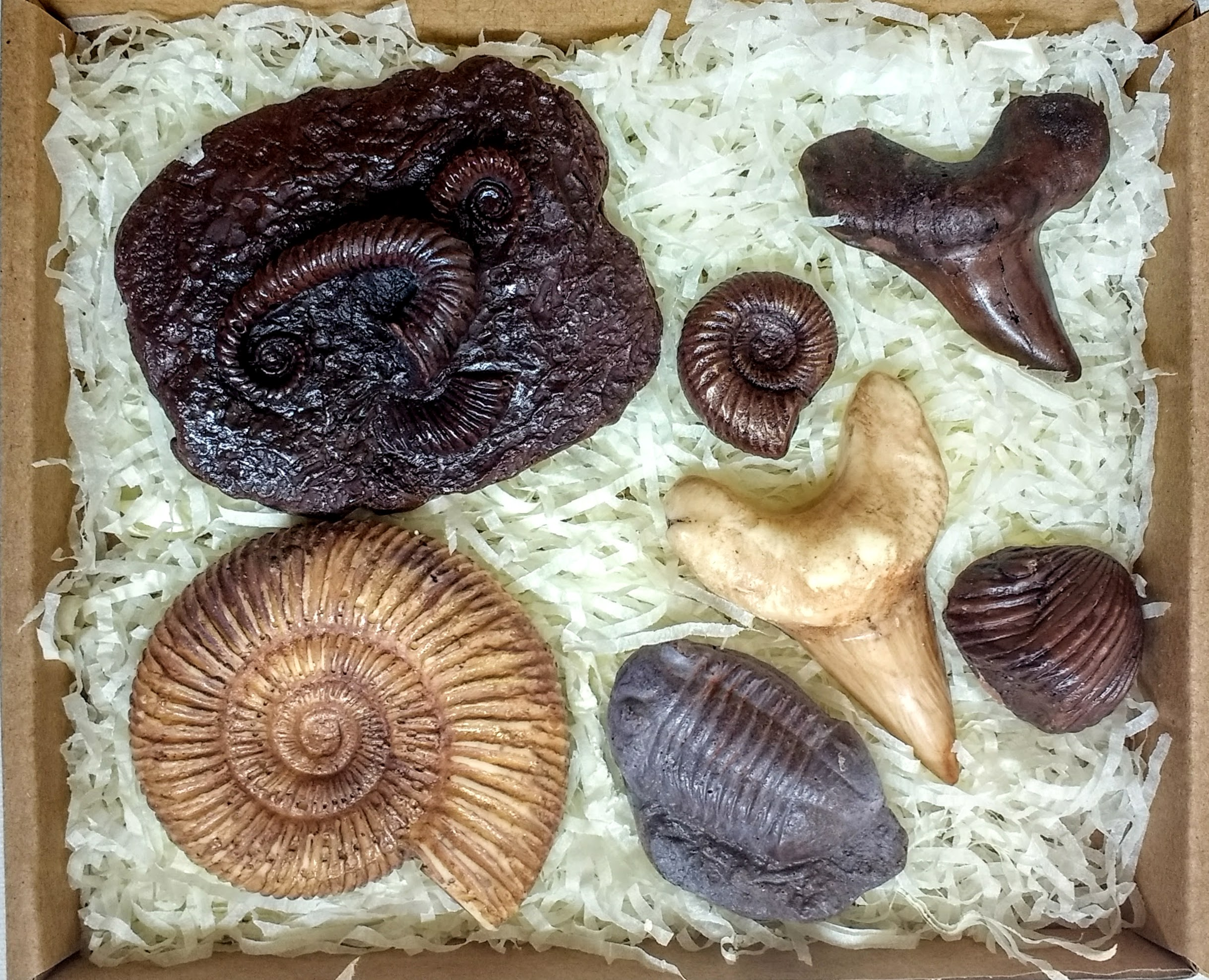 Chocolate Fossil Gift Idea