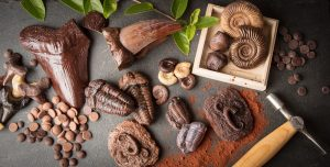Chocolate Fossils