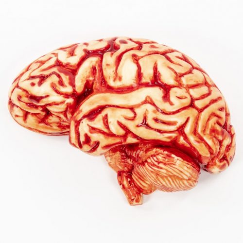 Edible Brain
